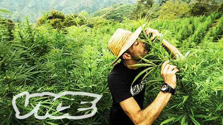 Kings of Cannabis (Documentary) by Vice